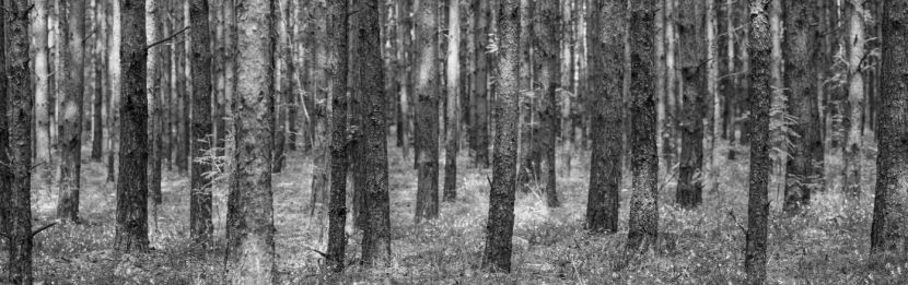 metsaseen